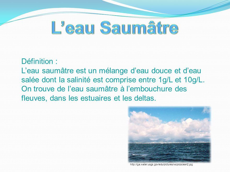 L'eau Saumâtre Définition :