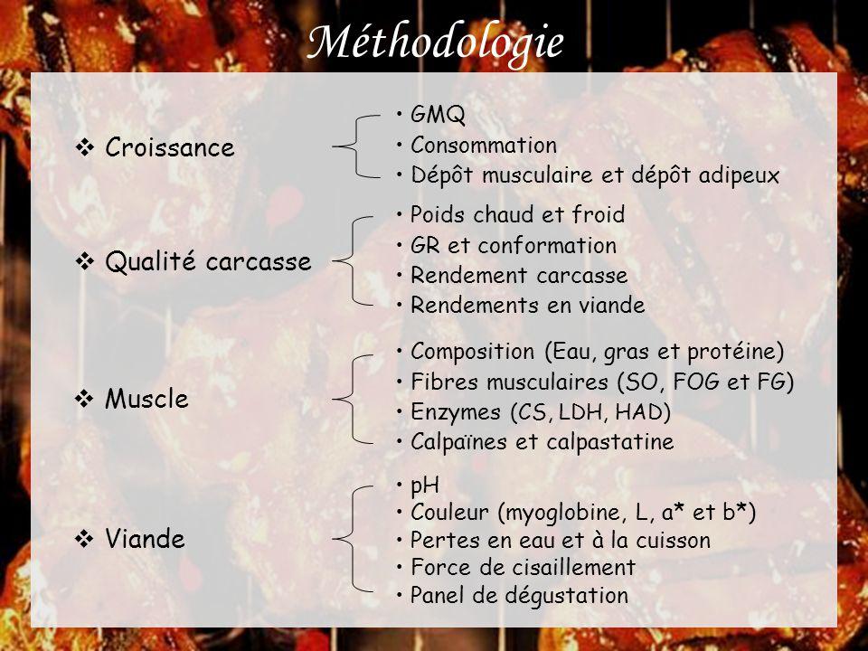 Méthodologie Croissance Qualité carcasse Muscle Viande GMQ