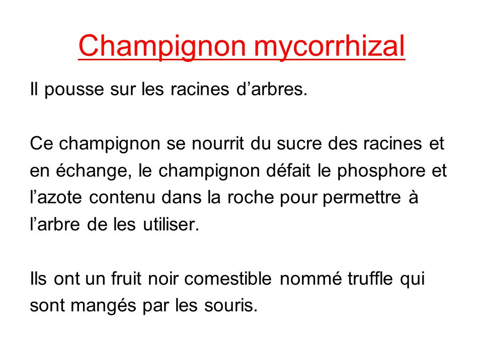 Champignon mycorrhizal