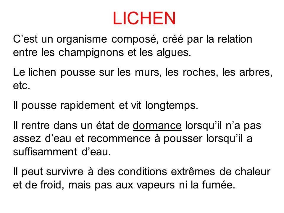 LICHEN C'est un organisme composé, créé par la relation entre les champignons et les algues.