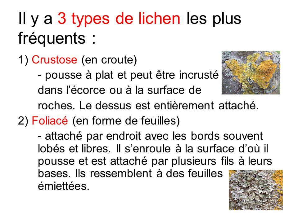 Il y a 3 types de lichen les plus fréquents :