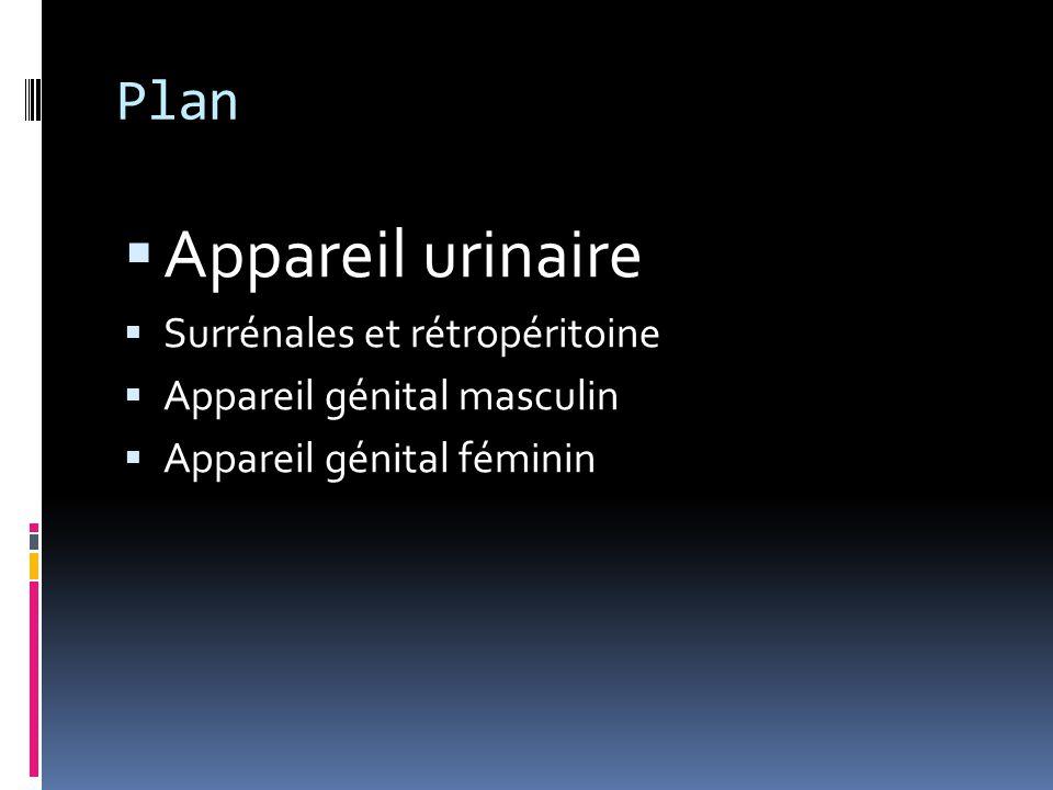 Appareil urinaire Plan Surrénales et rétropéritoine