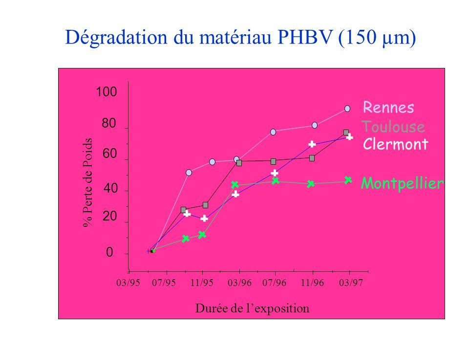 Dégradation du matériau PHBV (150 µm)