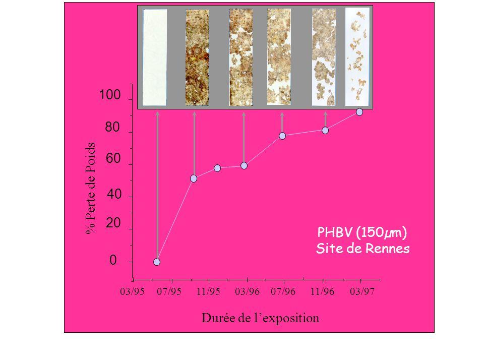 100 80 60 % Perte de Poids 40 20 PHBV (150µm) Site de Rennes