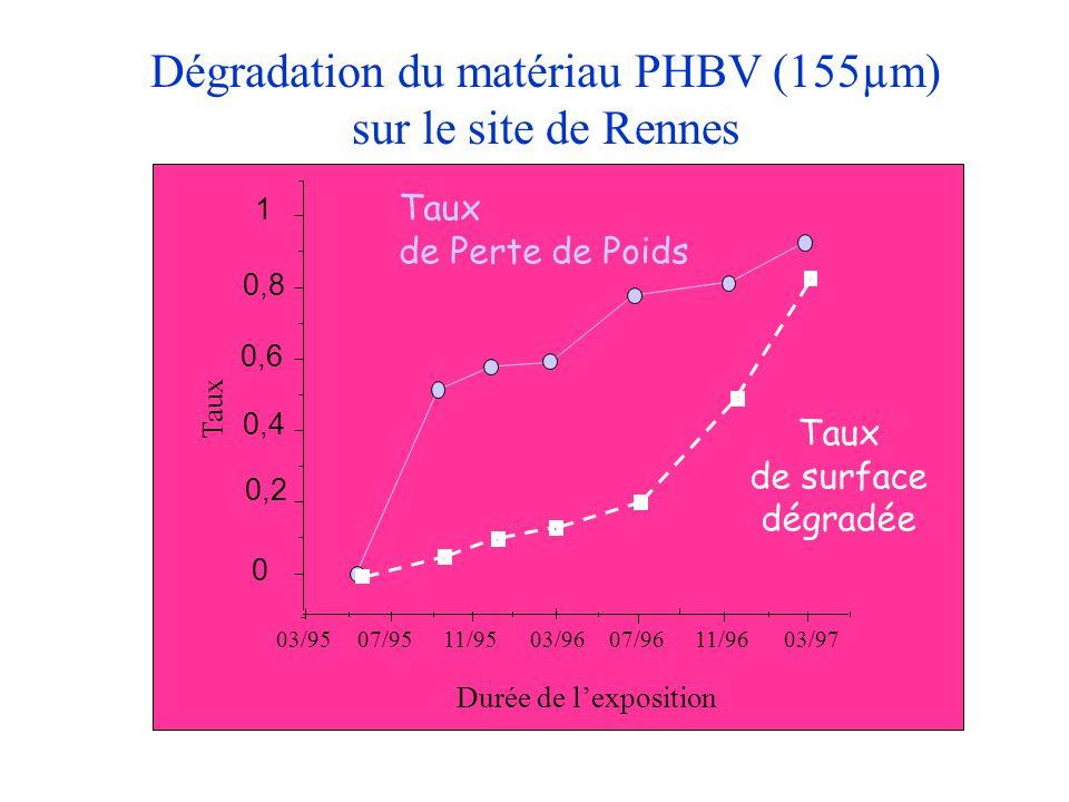 Dégradation du matériau PHBV (155µm) sur le site de Rennes