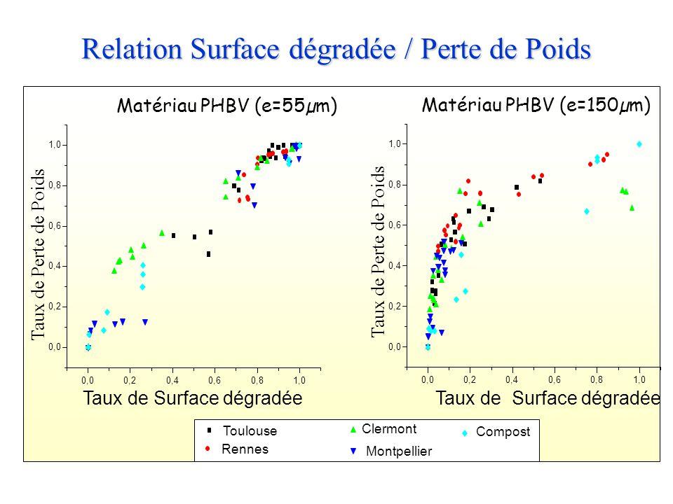 Relation Surface dégradée / Perte de Poids