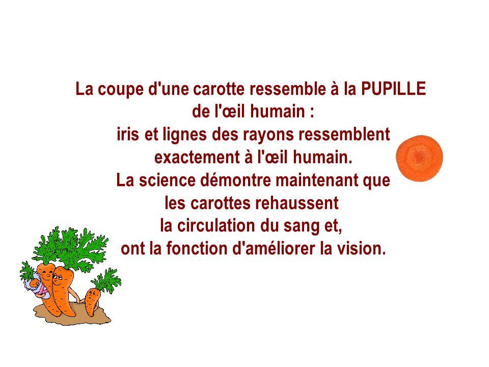 La coupe d une carotte ressemble à la PUPILLE de l œil humain :