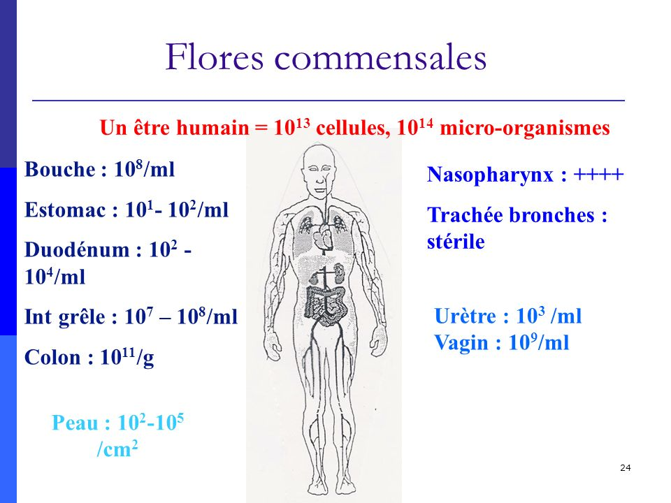 Un être humain = 1013 cellules, 1014 micro-organismes