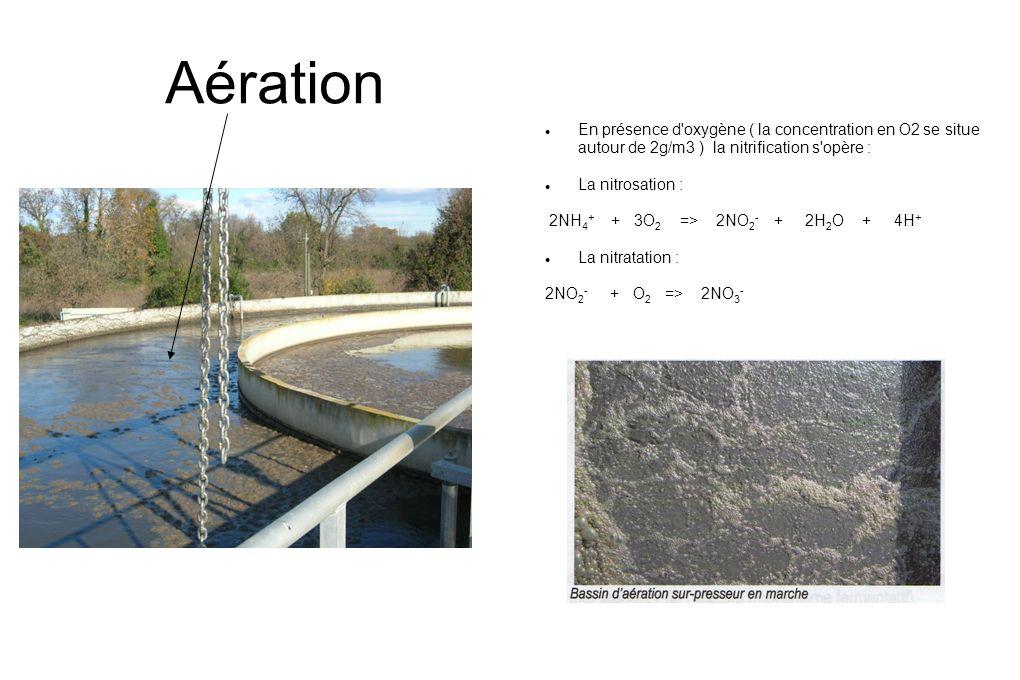 Aération En présence d oxygène ( la concentration en O2 se situe autour de 2g/m3 ) la nitrification s opère :