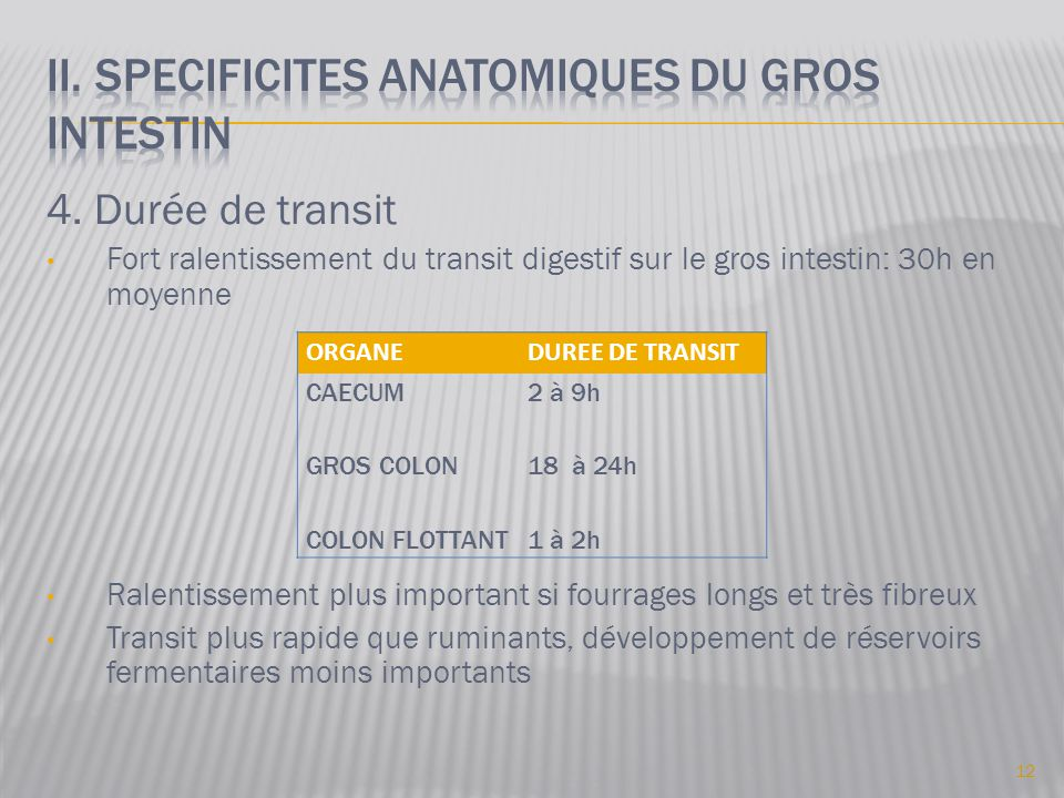 II. SPECIFICITES ANATOMIQUES DU GROS INtestin