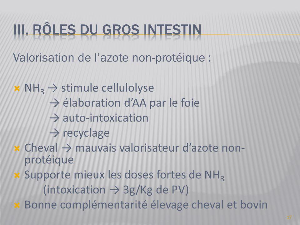 III. Rôles du gros intestin