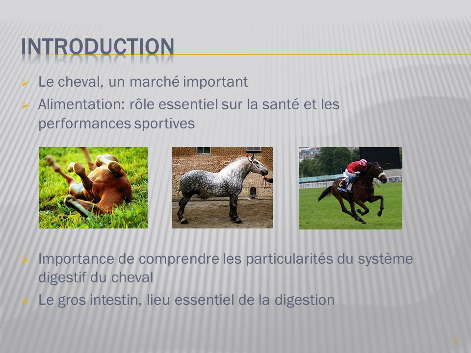 Introduction Le cheval, un marché important