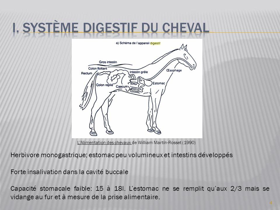 I. Système digestif du cheval