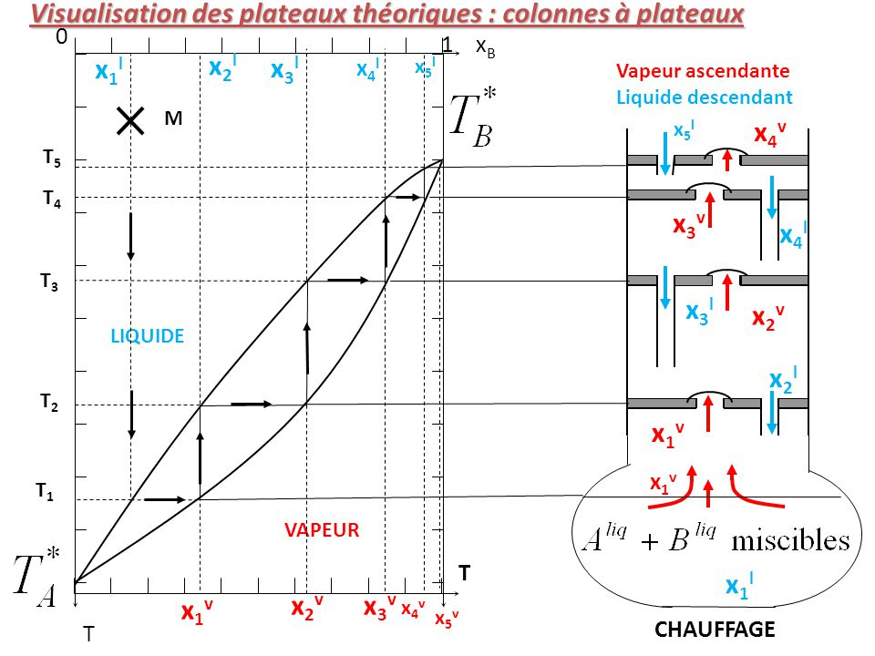 Visualisation des plateaux théoriques : colonnes à plateaux