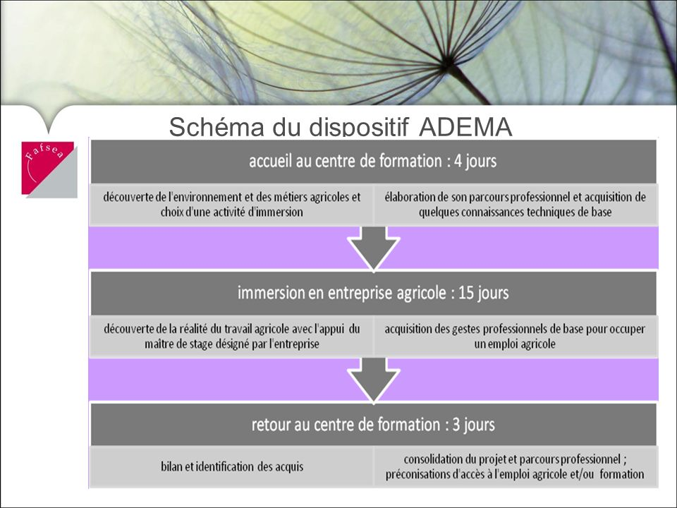 Schéma du dispositif ADEMA