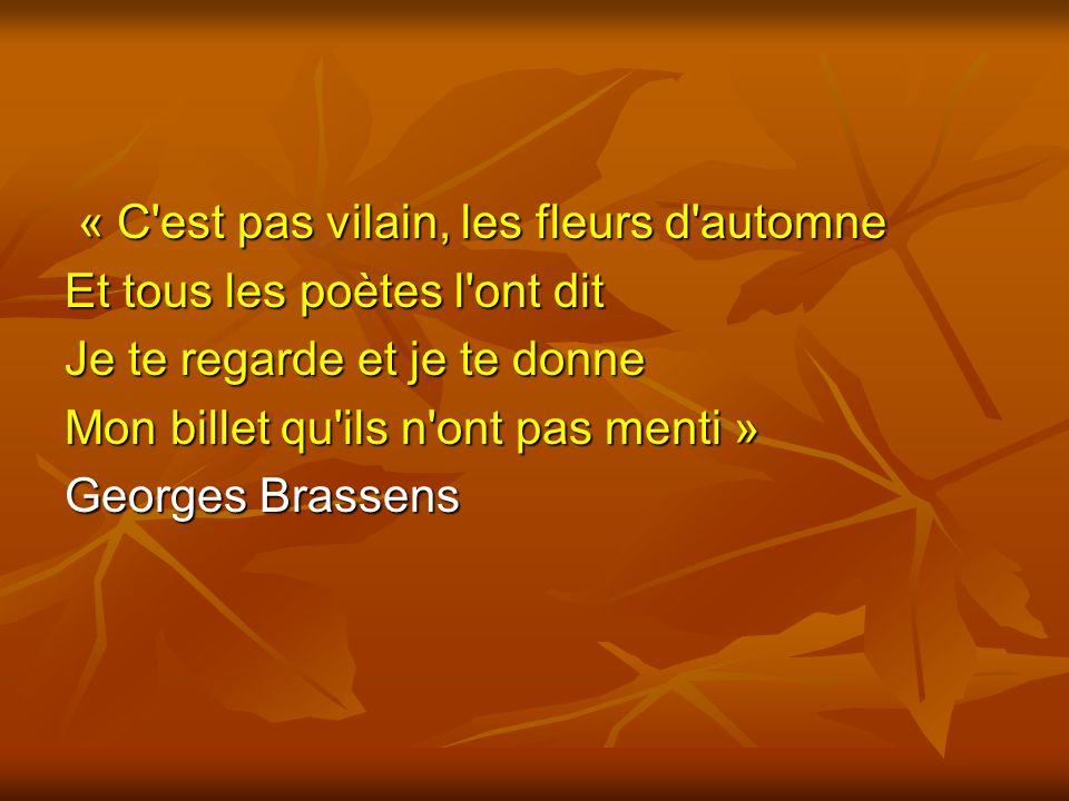 « C est pas vilain, les fleurs d automne
