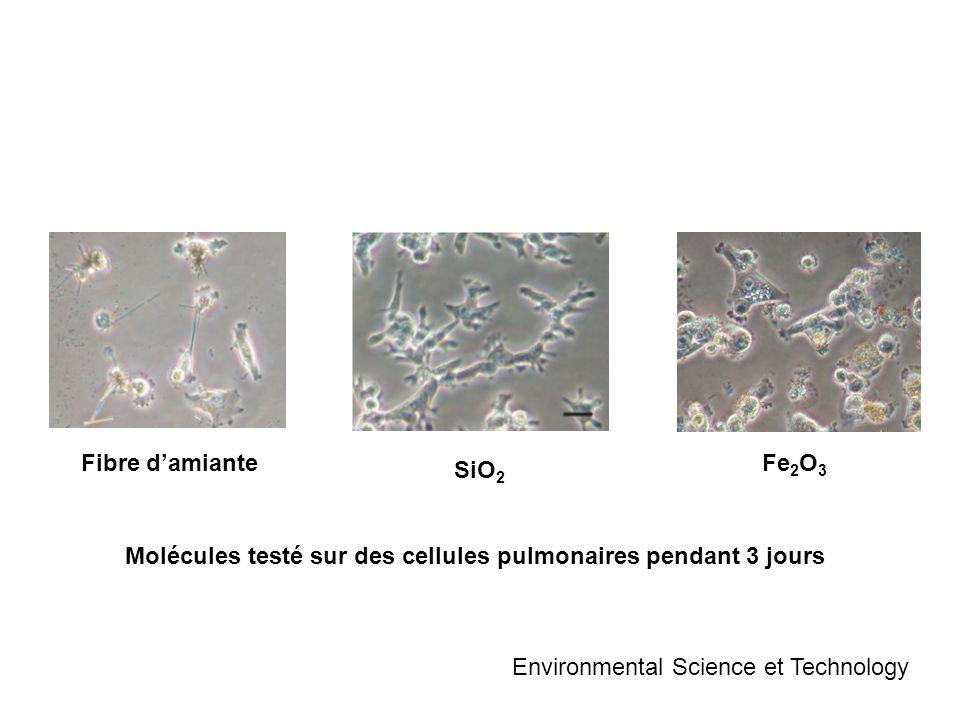 Fibre d'amianteFe2O3.SiO2. Molécules testé sur des cellules pulmonaires pendant 3 jours.