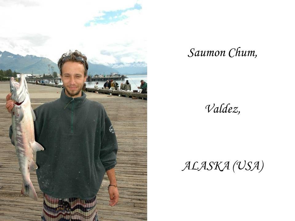Saumon Chum, Valdez, ALASKA (USA)