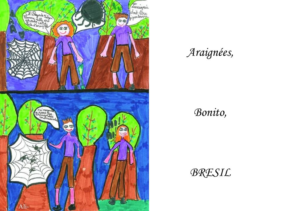Araignées, Bonito, BRESIL