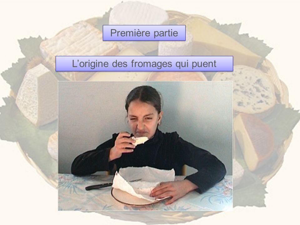 L'origine des fromages qui puent