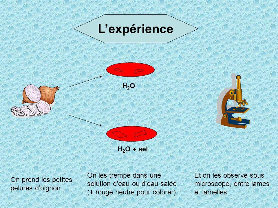 L'expérience H2O H2O + sel