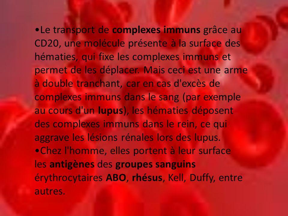 Le transport de complexes immuns grâce au CD20, une molécule présente à la surface des hématies, qui fixe les complexes immuns et permet de les déplacer. Mais ceci est une arme à double tranchant, car en cas d excès de complexes immuns dans le sang (par exemple au cours d un lupus), les hématies déposent des complexes immuns dans le rein, ce qui aggrave les lésions rénales lors des lupus.