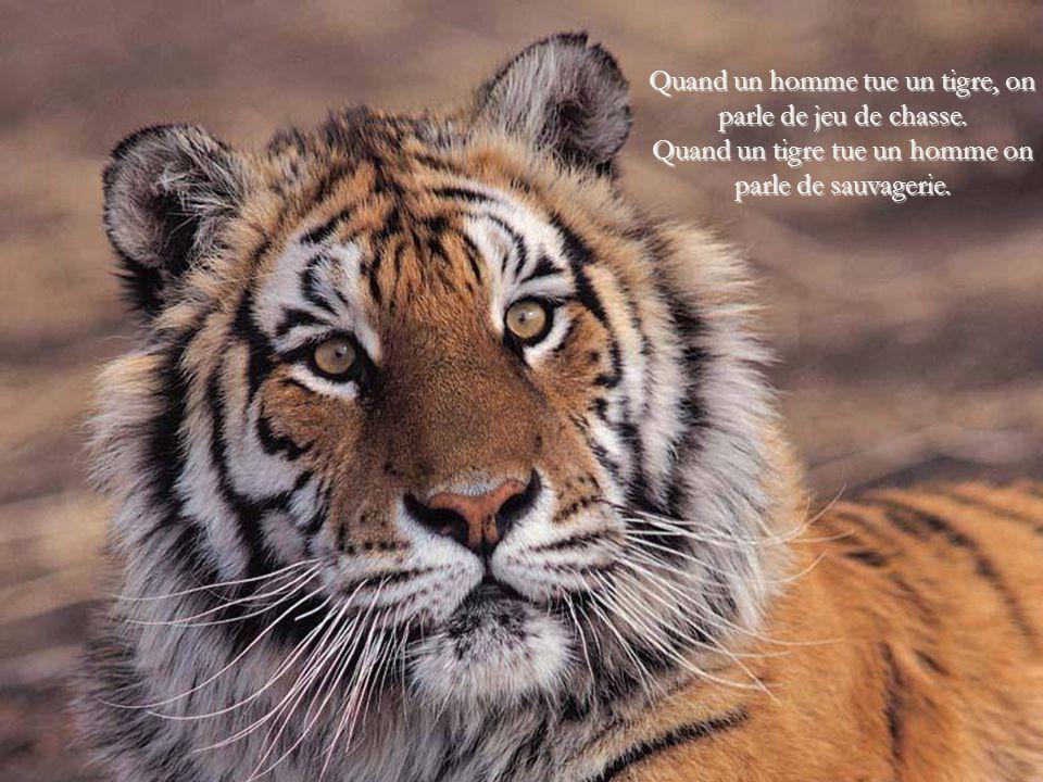 Quand un homme tue un tigre, on parle de jeu de chasse