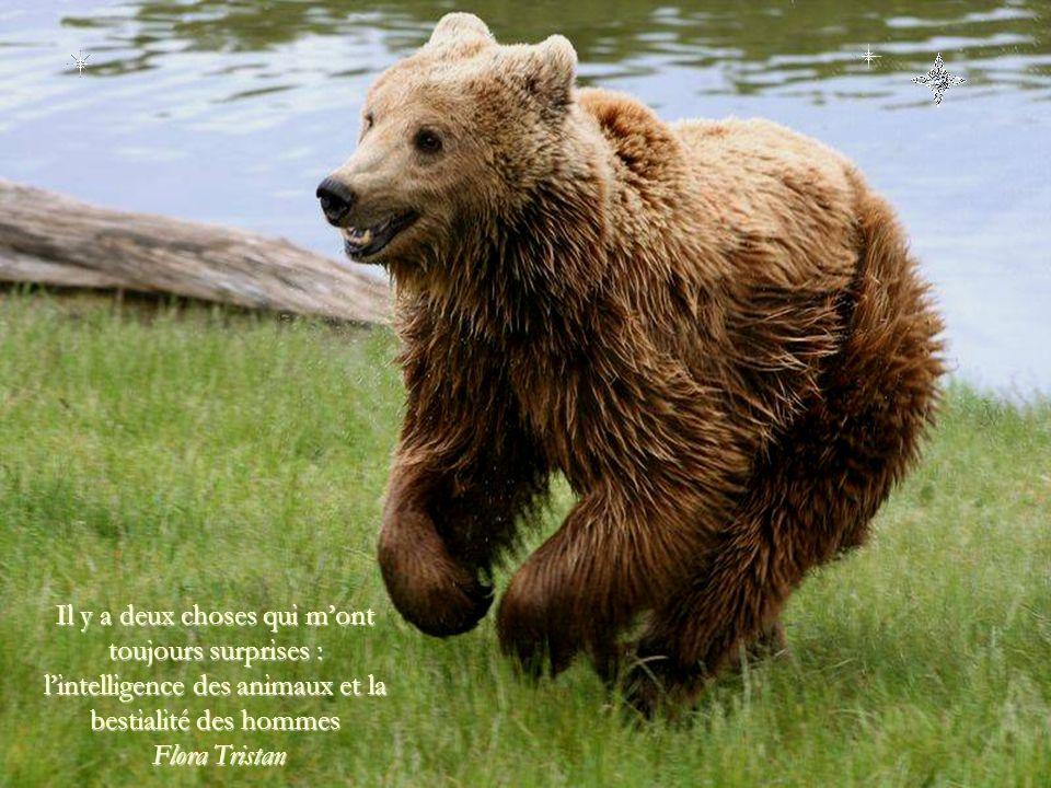 Il y a deux choses qui m'ont toujours surprises : l'intelligence des animaux et la bestialité des hommes