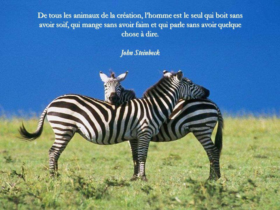 De tous les animaux de la création, l'homme est le seul qui boit sans avoir soif, qui mange sans avoir faim et qui parle sans avoir quelque chose à dire.