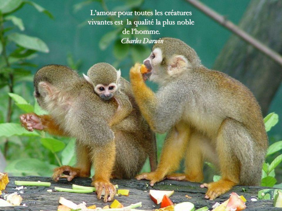 L'amour pour toutes les créatures vivantes est la qualité la plus noble de l'homme.