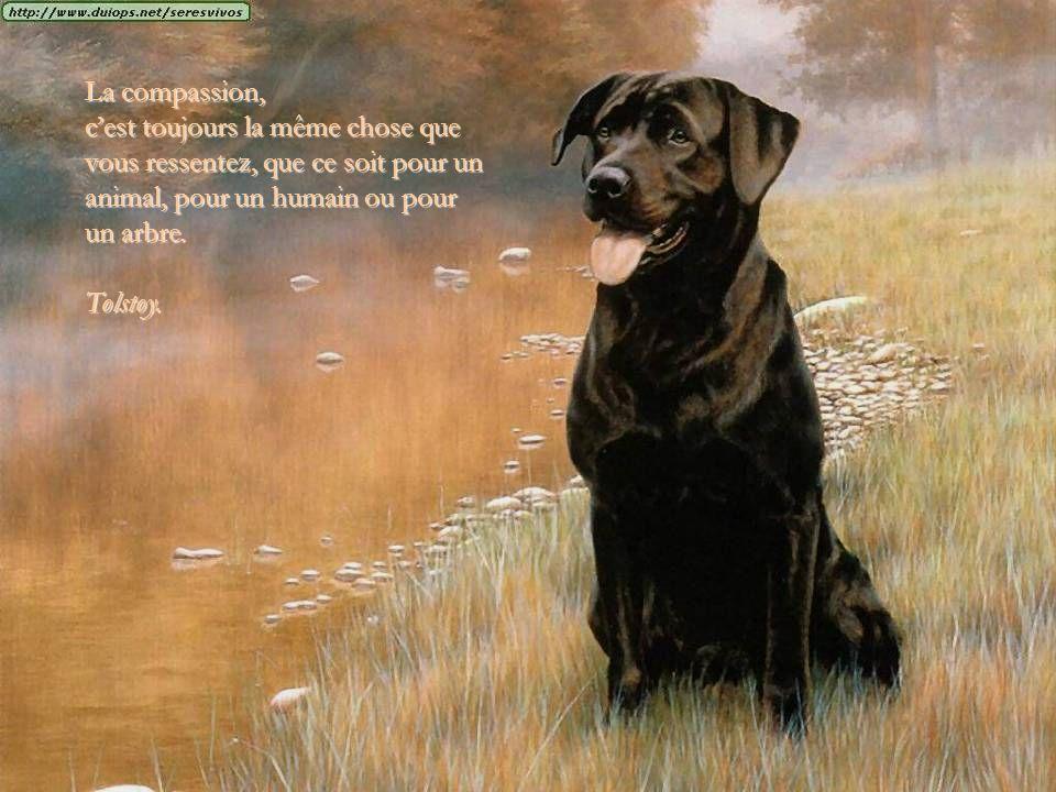 La compassion, c'est toujours la même chose que vous ressentez, que ce soit pour un animal, pour un humain ou pour un arbre.