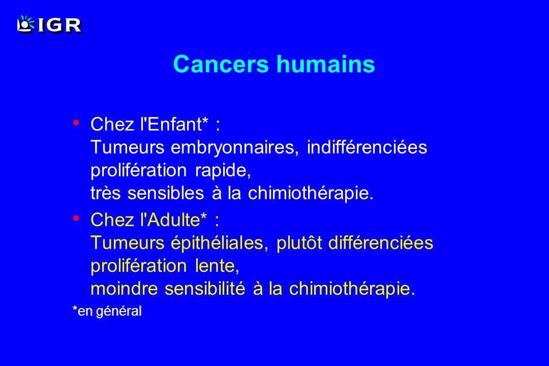 Cancers humains Chez l Enfant* : Tumeurs embryonnaires, indifférenciées prolifération rapide, très sensibles à la chimiothérapie.