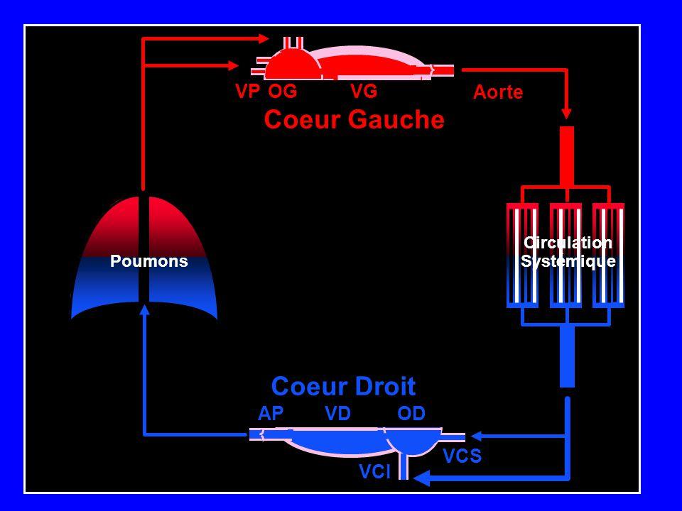 Coeur Gauche Coeur Droit VG OG VP OD VCS VCI VD AP Aorte Circulation