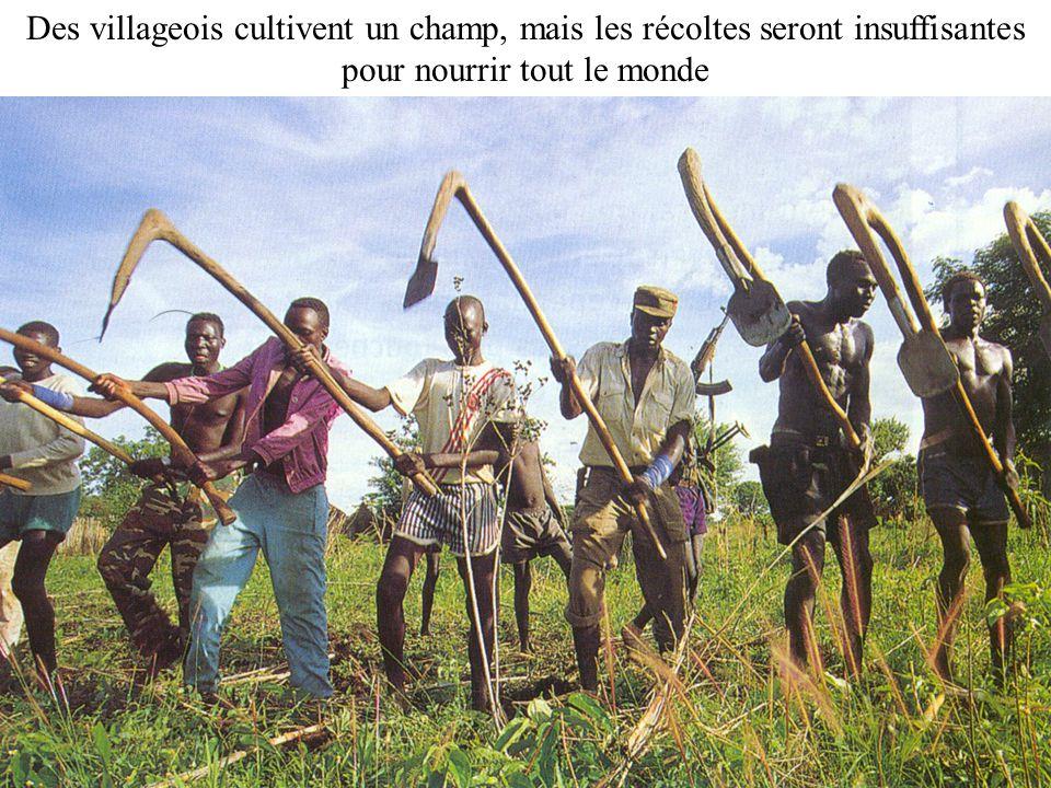 Exode rural 6 Des villageois cultivent un champ, mais les récoltes seront insuffisantes pour nourrir tout le monde.