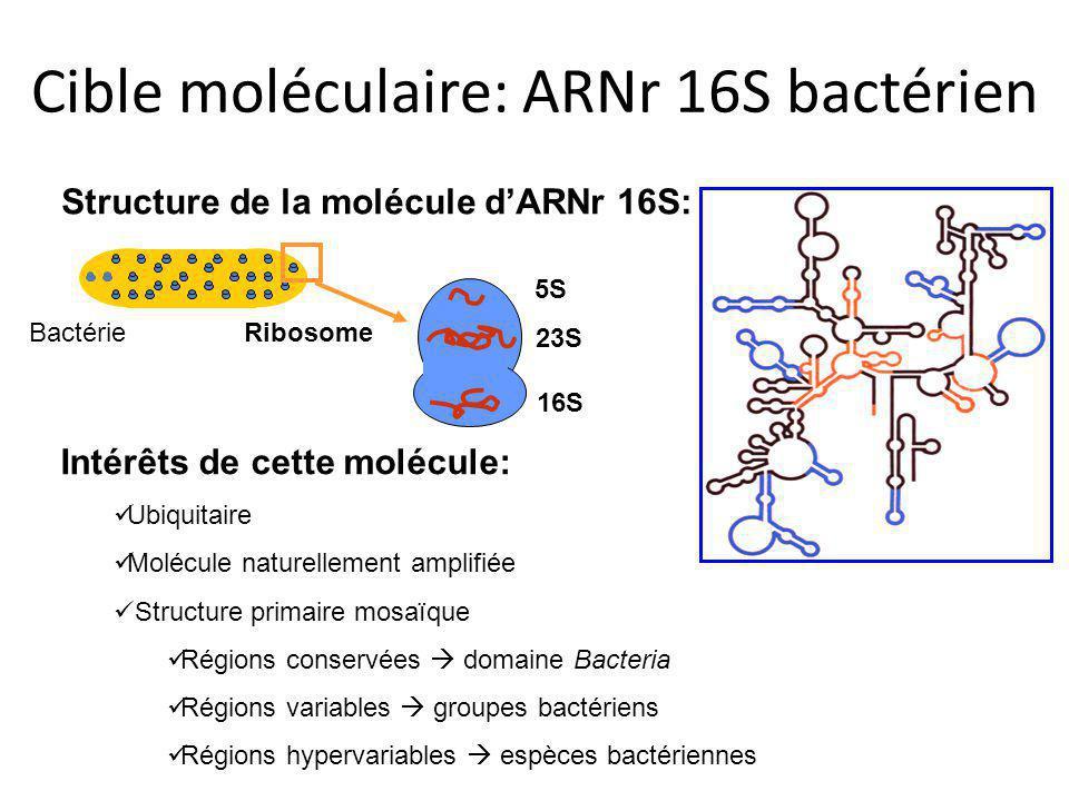Cible moléculaire: ARNr 16S bactérien