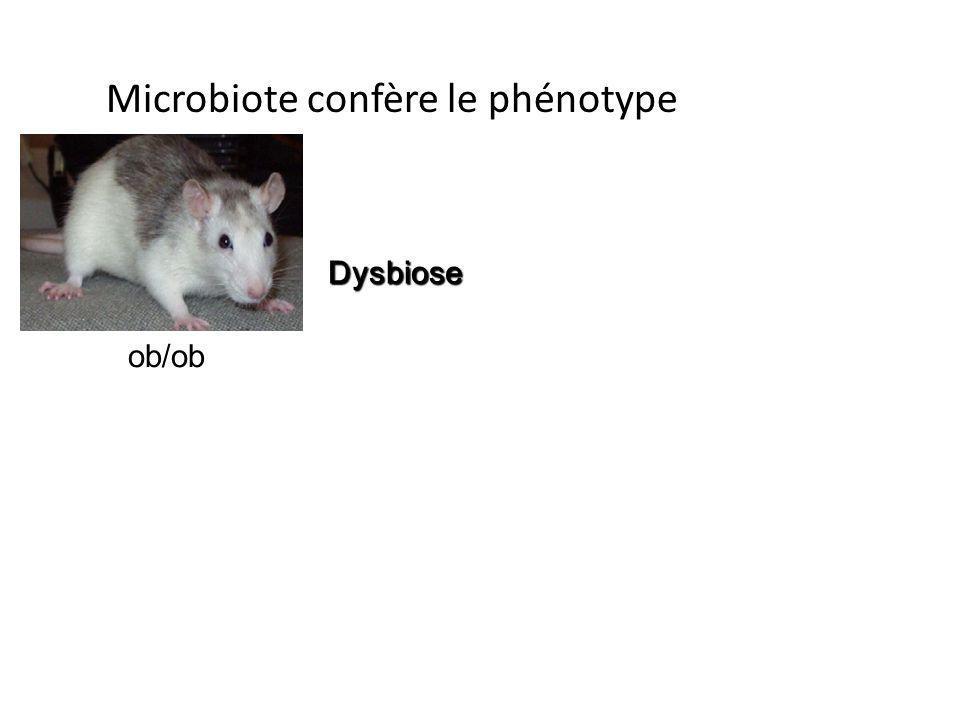 Microbiote confère le phénotype