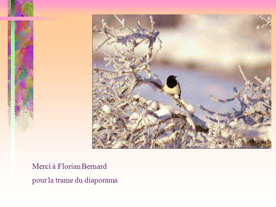 Merci à Florian Bernard