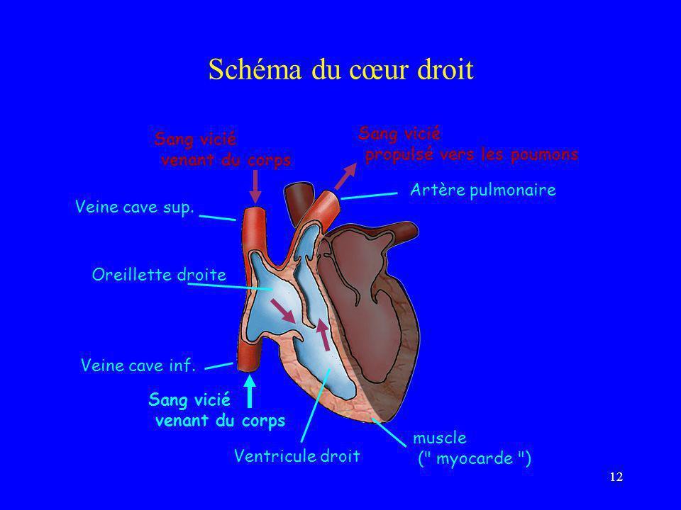 Schéma du cœur droit Sang vicié propulsé vers les poumons