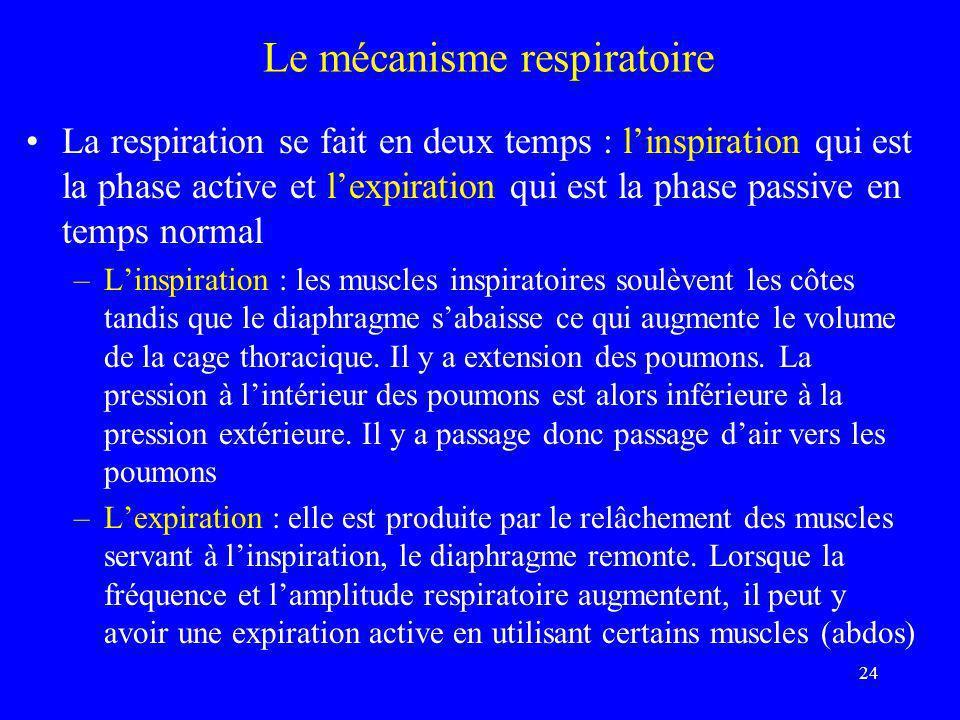 Le mécanisme respiratoire