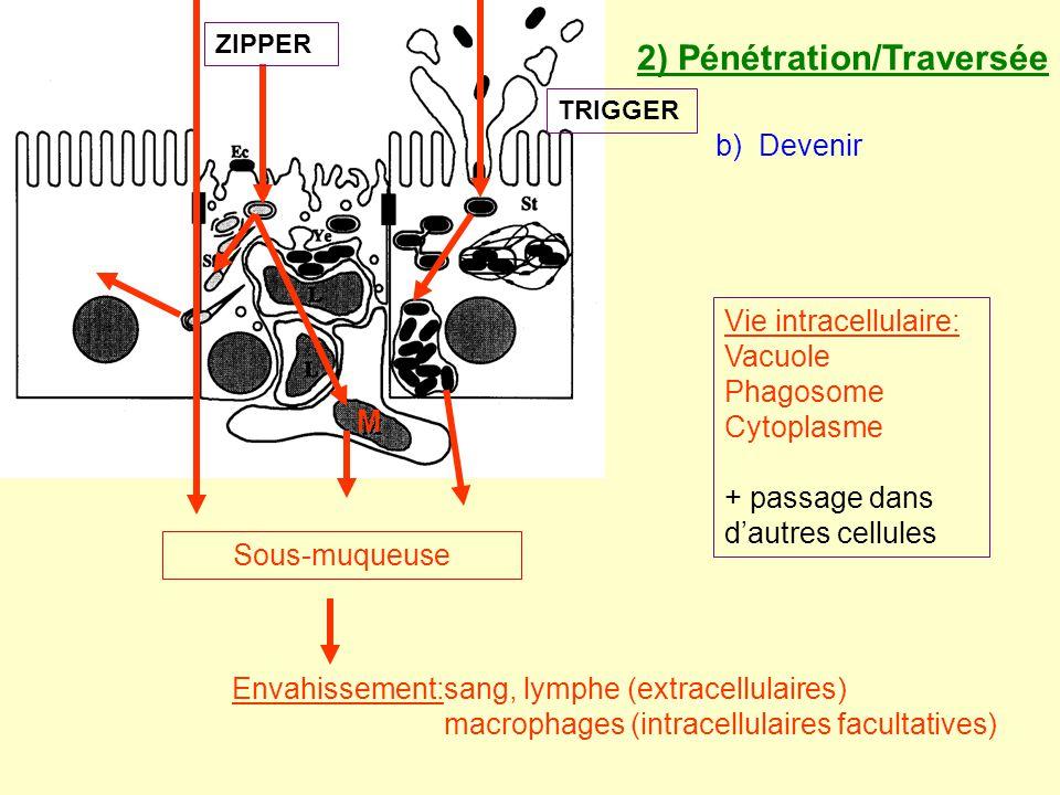 2) Pénétration/Traversée