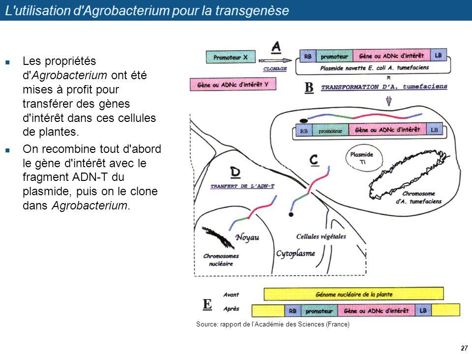 L utilisation d Agrobacterium pour la transgenèse