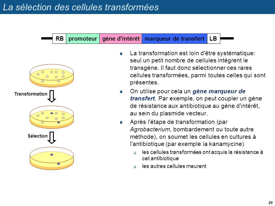 La sélection des cellules transformées