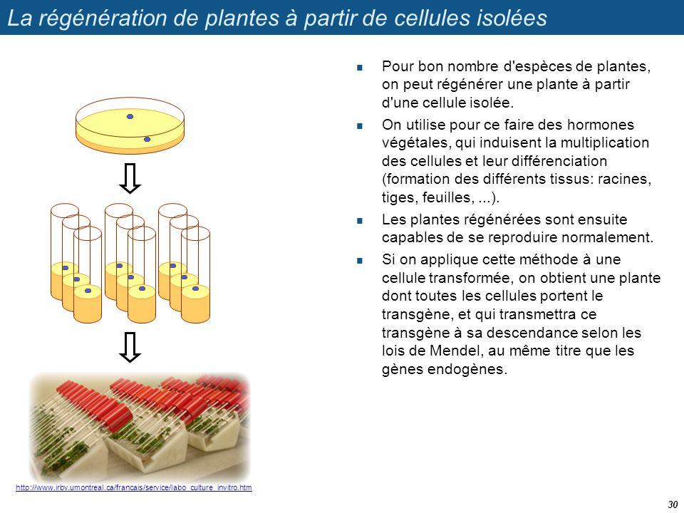 La régénération de plantes à partir de cellules isolées