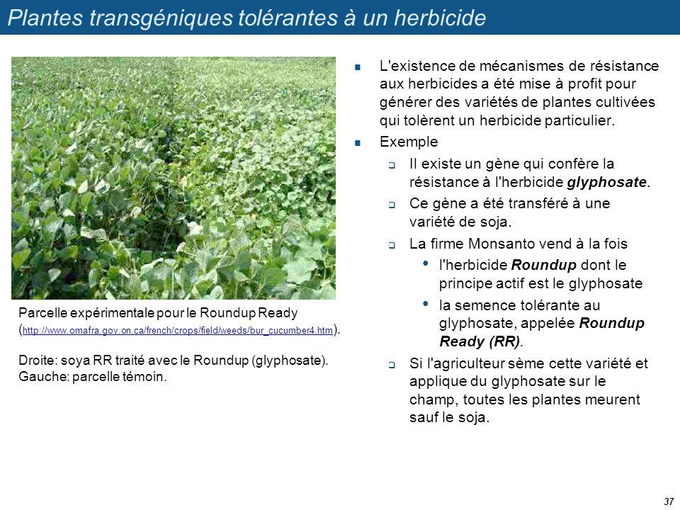 Plantes transgéniques tolérantes à un herbicide