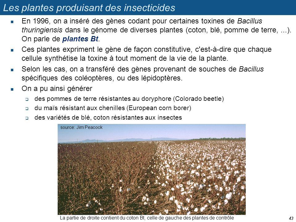 Les plantes produisant des insecticides