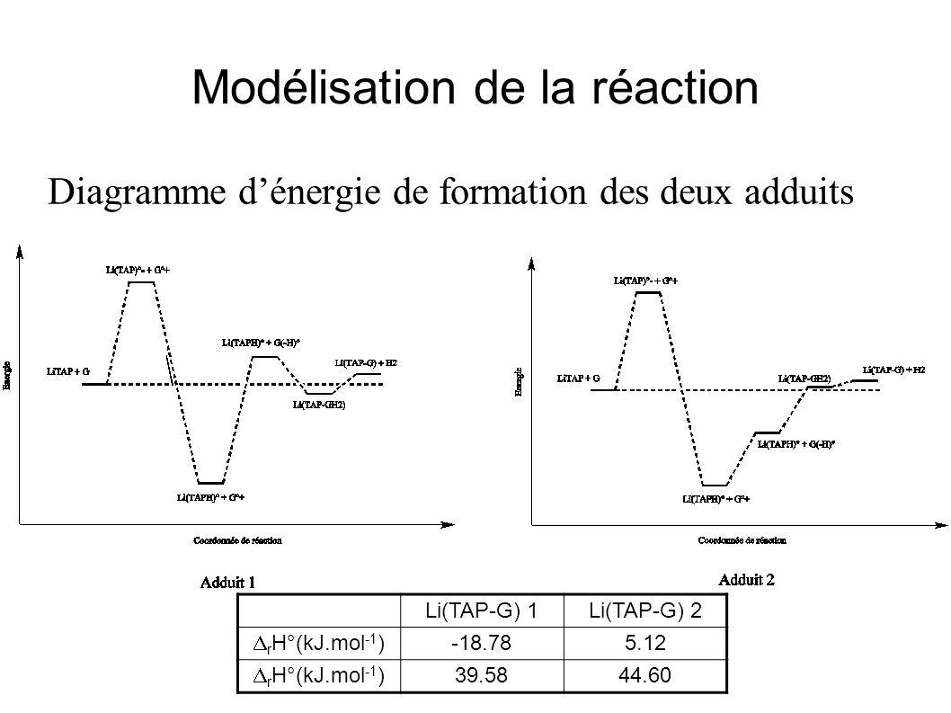 Modélisation de la réaction