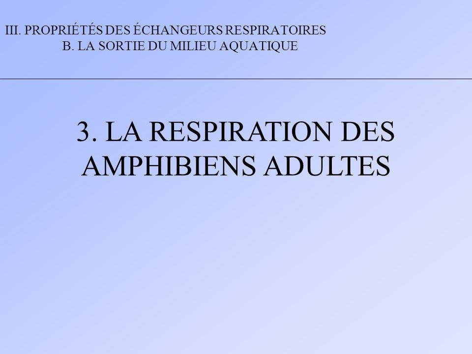3. LA RESPIRATION DES AMPHIBIENS ADULTES