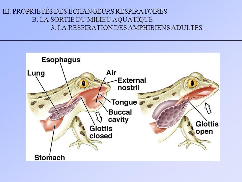 III. PROPRIÉTÉS DES ÉCHANGEURS RESPIRATOIRES B
