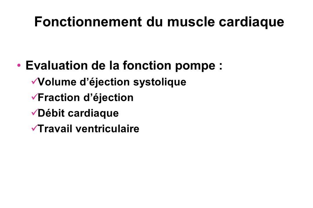 Fonctionnement du muscle cardiaque