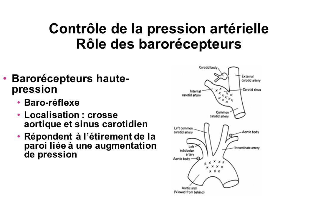 Contrôle de la pression artérielle Rôle des barorécepteurs